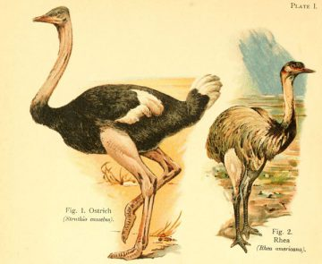 A book of birds London,Sidney Appleton,1908. http://biodiversitylibrary.org/item/48221